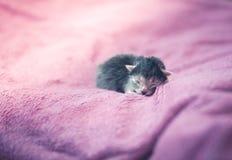 Λατρευτό γατάκι, νεογέννητη έννοια Στοκ φωτογραφίες με δικαίωμα ελεύθερης χρήσης