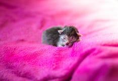 Λατρευτό γατάκι, νεογέννητη έννοια Στοκ Φωτογραφίες