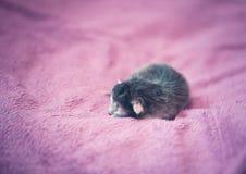 Λατρευτό γατάκι, νεογέννητη έννοια Στοκ εικόνες με δικαίωμα ελεύθερης χρήσης