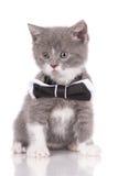 Λατρευτό γατάκι σε έναν δεσμό τόξων Στοκ Εικόνα