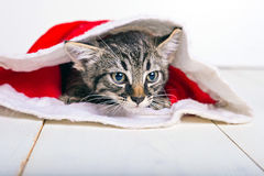 Λατρευτό γατάκι στο καπέλο santa Στοκ Εικόνες