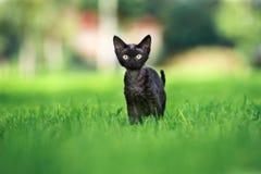 Λατρευτό γατάκι του Ντέβον rex που θέτει υπαίθρια στοκ εικόνα με δικαίωμα ελεύθερης χρήσης