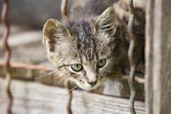 λατρευτό γατάκι Στοκ φωτογραφία με δικαίωμα ελεύθερης χρήσης