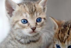 λατρευτό γατάκι Στοκ φωτογραφίες με δικαίωμα ελεύθερης χρήσης