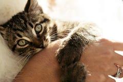 Λατρευτό γλυκό χέρι δαγκώματος γατακιών και παιχνίδι με τη νύφη πολυτέλειας στοκ εικόνα