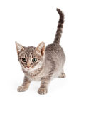 Λατρευτό εύθυμο τιγρέ γατάκι έτοιμο να επιτεθεί ξαφνικά Στοκ φωτογραφία με δικαίωμα ελεύθερης χρήσης