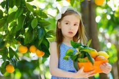 Λατρευτό μικρό κορίτσι που επιλέγει τα φρέσκα ώριμα πορτοκάλια Στοκ εικόνα με δικαίωμα ελεύθερης χρήσης