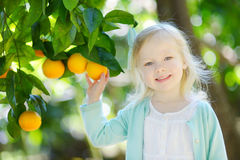Λατρευτό μικρό κορίτσι που επιλέγει τα φρέσκα ώριμα πορτοκάλια Στοκ Εικόνα