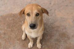 Λατρευτό σκυλί ματιών με το θολωμένο υπόβαθρο στοκ εικόνα