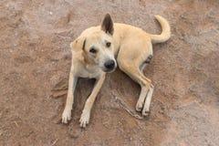 Λατρευτό σκυλί ματιών με το θολωμένο υπόβαθρο στοκ φωτογραφία με δικαίωμα ελεύθερης χρήσης