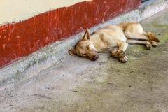 Λατρευτό σκυλί που βάζει και που κοιμάται, Κουίτο, Ισημερινός Στοκ εικόνες με δικαίωμα ελεύθερης χρήσης