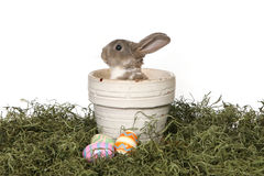 λατρευτό bunny ανασκόπησης panter &lam Στοκ Εικόνες