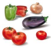 Λαχανικά για τη φυτική stew απεικόνιση διανυσματική απεικόνιση