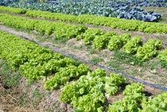 λαχανικά πλοκών Στοκ Εικόνες