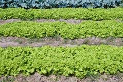 λαχανικά πλοκών Στοκ Εικόνα