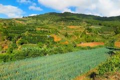 Λαχανικά που αυξάνονται κοντά σε Dalat, Βιετνάμ Στοκ Εικόνες