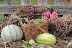 Λαχανικά πτώσης στο καλάθι πάνω από το άχυρο ή το σανό Στοκ Εικόνες
