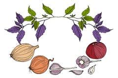 Λαχανικά πλαισίων, άσπρο υπόβαθρο πρασίνων Ελεύθερη απεικόνιση δικαιώματος