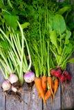 λαχανικά ρίζας Στοκ Εικόνες