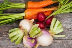 λαχανικά ρίζας Στοκ εικόνα με δικαίωμα ελεύθερης χρήσης