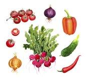 Λαχανικά: ραδίκι, ντομάτες, κρεμμύδι, πιπέρι, τσίλι, αγγούρι Στοκ φωτογραφία με δικαίωμα ελεύθερης χρήσης