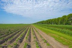 Λαχανικά σε έναν τομέα Στοκ φωτογραφίες με δικαίωμα ελεύθερης χρήσης
