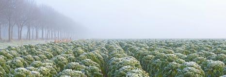 Λαχανικά σε έναν τομέα Στοκ Φωτογραφία