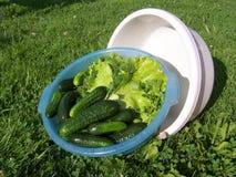 Λαχανικά στη σουπιέρα Στοκ Εικόνες