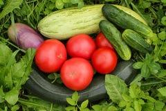 Λαχανικά στη χλόη Στοκ Εικόνες
