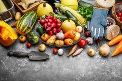 Λαχανικά συγκομιδών με τον κήπο κουζινών χορταριών στοκ εικόνες με δικαίωμα ελεύθερης χρήσης