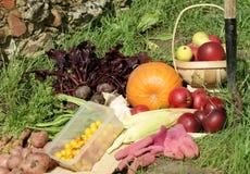 λαχανικά συγκομιδών Στοκ Φωτογραφίες