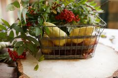 Λαχανικά φθινοπώρου, κολοκύθα, αχλάδι, σταφύλια, συγκομιδή στην ξύλινη ετικέττα Στοκ φωτογραφία με δικαίωμα ελεύθερης χρήσης
