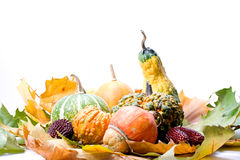 λαχανικά φύλλων καρπών Στοκ εικόνες με δικαίωμα ελεύθερης χρήσης