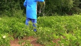 Λαχανικά ψεκασμού ατόμων κηπουρών στον κήπο απόθεμα βίντεο