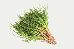 Λαχανικά Agretti στοκ εικόνες