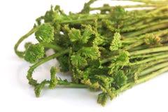 Λαχανικό ανοίξεων argentea Selaginella Στοκ εικόνες με δικαίωμα ελεύθερης χρήσης