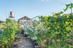 λαχανικό κήπων Στοκ Εικόνα
