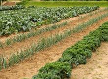 λαχανικό κήπων στοκ φωτογραφίες με δικαίωμα ελεύθερης χρήσης