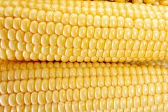 Λαχανικό καλαμποκιού που απομονώνεται στο λευκό, τρόφιμα, σιτάρι στοκ εικόνες