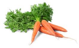 Λαχανικό καρότων με τα φύλλα που απομονώνονται στο λευκό Στοκ Φωτογραφίες