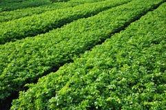 λαχανικό πλοκών Στοκ εικόνα με δικαίωμα ελεύθερης χρήσης