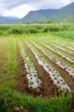 λαχανικό πλοκών Στοκ Εικόνα