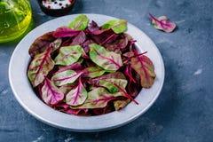 λαχανικό σαλάτας προετοιμασιών μαρουλιού συστατικών Φρέσκα οργανικά ακατέργαστα φύλλα των τεύτλων μαρουλιού σε ένα σκοτεινό υπόβα Στοκ φωτογραφίες με δικαίωμα ελεύθερης χρήσης
