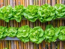 Λαχανικό στη διακοσμημένη ιδέα κήπων τοίχων κάθετη Στοκ εικόνες με δικαίωμα ελεύθερης χρήσης