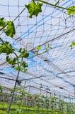 λαχανικό υπόστεγων Στοκ Φωτογραφίες