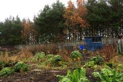 Λαχανικό φθινοπώρου στη διανομή Στοκ Εικόνες