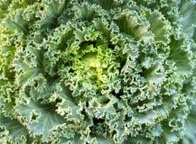 λαχανικό 05 Στοκ Εικόνα