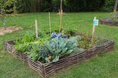 λαχανικό arnament Στοκ εικόνες με δικαίωμα ελεύθερης χρήσης