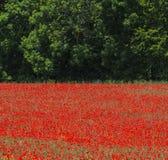 Λα Breole (Haute Provence) Στοκ Εικόνα