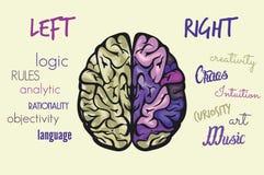 Λειτουργία εγκεφάλου Στοκ εικόνα με δικαίωμα ελεύθερης χρήσης
